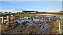 NJ1461 : Guttery Ground by Anne Burgess