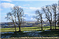 NY9840 : Trees beside fence line by Trevor Littlewood