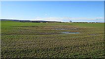 NJ1262 : Wet Field by Anne Burgess