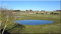 NJ1263 : Ephemeral Pond by Anne Burgess