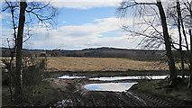 NJ1565 : Field near Starmoss by Anne Burgess