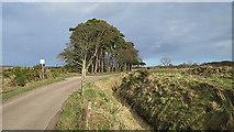 NJ1363 : Minor Road near Kirkton by Anne Burgess