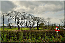 H5472 : Trees and a cloudy sky, Bracky by Kenneth  Allen