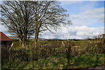 H5371 : Bare tree, Bracky by Kenneth  Allen