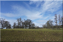 NZ1221 : Raby Castle Deer Park by Malcolm Neal