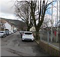 SS9596 : Deciduous trees, River Terrace, Treorchy by Jaggery