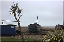 TQ1602 : Winter palms on Worthing beach by Robert Eva