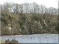 NZ0120 : River cliff below Shipley Wood by Christine Johnstone