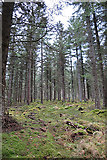 NJ4747 : Forest on Meikle Balloch by Anne Burgess