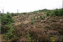 NJ4750 : Open Land on Meikle Balloch by Anne Burgess