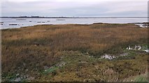 TM2223 : Kirby-le-Soken: Salt marsh and creeks north of Peter's Point by Nigel Cox