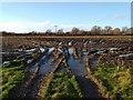 SJ4468 : A muddy field near Mickle Trafford by Jeff Buck