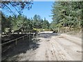 SY8491 : Chamberlayne's Heath, military road by Mike Faherty