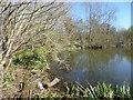 TQ5156 : The West Lake at Sevenoaks Wildlife Reserve by Marathon
