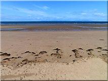 NS3321 : The beach at Ayr by Steve Daniels