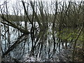 SE3423 : Trees in the water, Stanley Marsh local nature reserve by Christine Johnstone