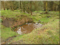 SE0756 : Ducks in a woodland puddle by Stephen Craven