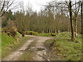 SE0756 : Track junction in Laund Pasture Plantation by Stephen Craven