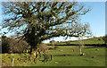 SX6963 : Bridleway near Dockwell Farm by Derek Harper