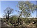 TF4107 : Track and trees off Rummers Lane, Wisbech St Mary by Richard Humphrey