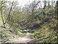 SJ9594 : Through Gower Hey Wood by Gerald England