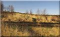 SX9276 : Track and path junction, Little Haldon by Derek Harper