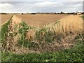 TF4209 : Diverging dikes on Flatmoor Field near Wisbech St Mary by Richard Humphrey