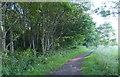 NT3395 : Fife Coastal Path at Crowpark Wood by Mat Fascione