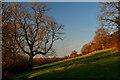 ST1611 : Clayhidon : Grassy Field by Lewis Clarke