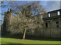 SE2536 : Spring tree at Kirkstall Abbey by Stephen Craven
