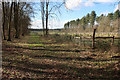 TL7890 : Fenced area in Thetford Forest by Hugh Venables