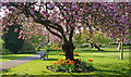 SK5804 : Spring in Castle Gardens by Mat Fascione