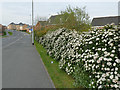 SE3027 : Hedgerow, St George's Road, Middleton by Stephen Craven