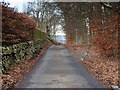 NT2439 : Craigerne Lane by David Dixon