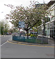 ST2995 : April blossom, Glyndwr Road, Cwmbran by Jaggery