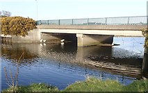 J3731 : Feral Geese beneath the A2 Shimna Road Bridge, Newcastle by Eric Jones