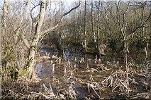 NT5682 : Marsh, Balgone by Richard Webb