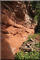 SO7799 : Sandstone cliff, Badger Dingle by Derek Harper