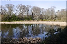 NT5682 : East end of the Balgone Lakes by Richard Webb