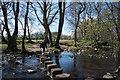 NZ0738 : Stepping stones across Waskerley Beck by Trevor Littlewood