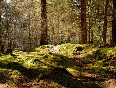 NH6353 : Above the ravine of the Big Burn in Littleburn Wood by Julian Paren
