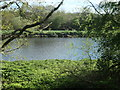 SE3521 : River Calder, above Kirkthorpe weir by Christine Johnstone
