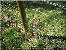 NT7452 : Wire-netting ties near Langton Burn by ian shiell