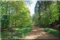 TL9018 : Pods Wood Path by Glyn Baker