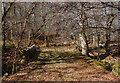 NH4539 : Old road, Eskadale by Craig Wallace
