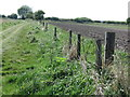 NZ3370 : Old Boundary Fence near Murton by Geoff Holland