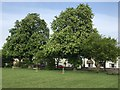 TL4195 : Horse Chestnut trees on March Recreation Ground by Richard Humphrey