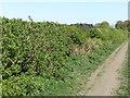 NZ3271 : Public Footpath near Shiremoor by Geoff Holland