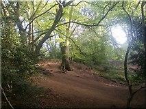 TQ2687 : Hampstead Heath by David Howard