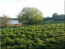 TQ2187 : Woodfield Park, Kingsbury by David Howard